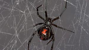 _86872948_spider_scottcamazine