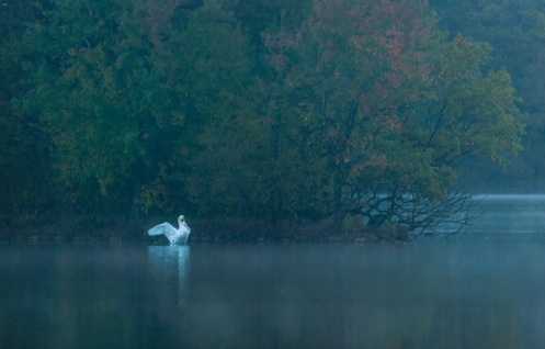 Swan-Sunrise-Lake-District